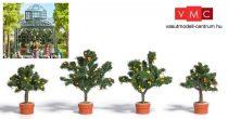 Busch 6619 Citrom és narancsfa kőedényekben, 2-2 db (H0)