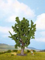 Noch 25860 Tölgyfa, 16 cm